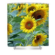Cream Of The Crop Shower Curtain