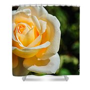 Cream Rose Shower Curtain