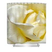 Creamy Rose Shower Curtain