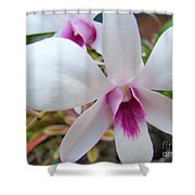 Creamy White And Hot Pink Orchid Shower Curtain