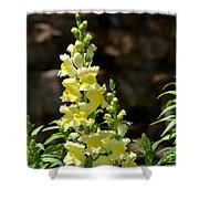 Creamy Yellow Snapdragon Shower Curtain