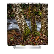 Creek With Trees Shower Curtain