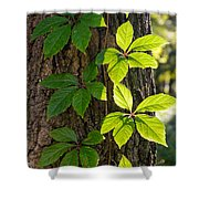 Creeper Leaves Under The Sun Shower Curtain