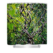 Creeping Vines Shower Curtain