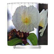 Crepe Ginger Costus Speciosus Shower Curtain