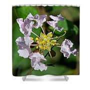 Crepe Myrtle Blossom Ring Shower Curtain