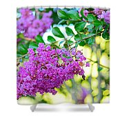 Crepe Myrtle Tree By Kaye Menner Shower Curtain