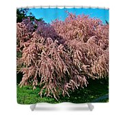 Crepey Myrtle Tree In Istanbul-turkey Shower Curtain