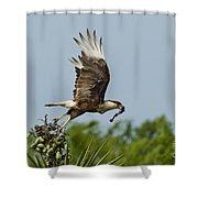 Crested Caracara Shower Curtain