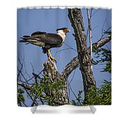 Crested Caracara Shower Curtain