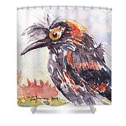 Akohekohe - Hawaiian Crested Honeycreeper Shower Curtain