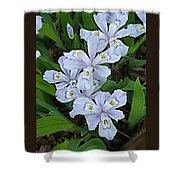 Wild Blue Crested Iris Shower Curtain