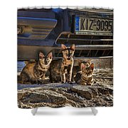 Cretan Cats-1 Shower Curtain