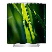 Cricket Silhouette Shower Curtain