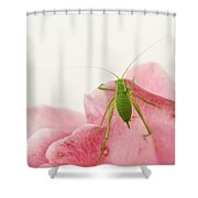 Crickets - Gryllidae Shower Curtain