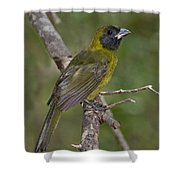 Crimson-collared Grosbeak Shower Curtain
