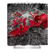 Crimson Foliage Shower Curtain