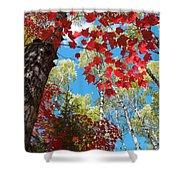 Crimson Foliage Shower Curtain