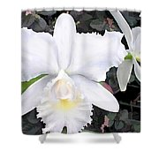Crisp White Orchids In A Shady Garden Shower Curtain