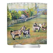 Croatian Goats Shower Curtain