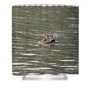 Crocodile   #0579 Shower Curtain