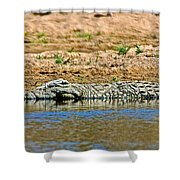 Crocodile In Watering Hole In Kruger National Park-south Africa Shower Curtain