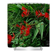 Crocosmia In Red Shower Curtain