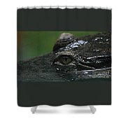 Croc's Eye-1 Shower Curtain