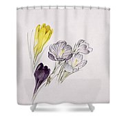 Crocus Shower Curtain
