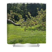 Crooked Apple Tree Shower Curtain