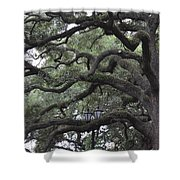 Crooked Branches Shower Curtain