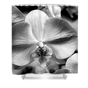 Cross Orchid Shower Curtain