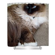 Crossed Paws Shower Curtain