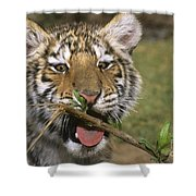 Crosseyed Siberian Tiger Cub Endangered Species Wildlife Rescue Shower Curtain