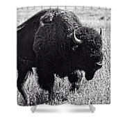 Crossing The Land Shower Curtain