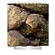 Crotchety Old Moss Covered Tree Man Shower Curtain