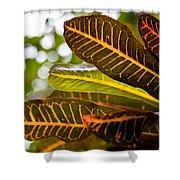 Croton Shower Curtain