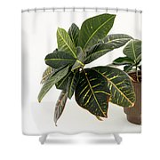 Croton Houseplant Shower Curtain