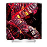 Croton Leaves In Black And Red Shower Curtain