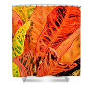 Croton's Many Colors Shower Curtain