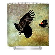 Crow And Red-winged Blackbird Shower Curtain