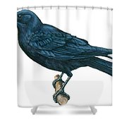 Crow Shower Curtain by Anonymous