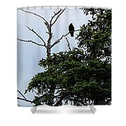 Crow - Black  Bird - Loud Call Shower Curtain