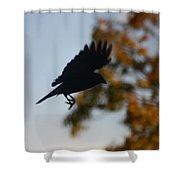 Crow In Flight 1 Shower Curtain