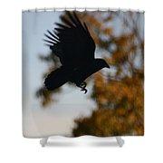 Crow In Flight 2 Shower Curtain