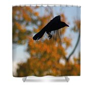 Crow In Flight 3 Shower Curtain