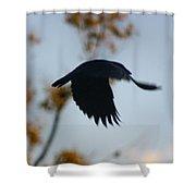 Crow In Flight 4 Shower Curtain