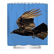 Crow In Flight Shower Curtain