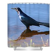 Crow In The Water Shower Curtain