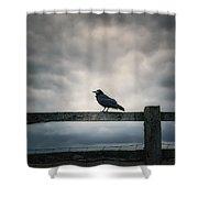 Crow Shower Curtain by Joana Kruse